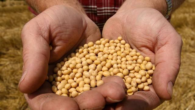 Ein Bauer zeigt Saatgut von Monsanto (Archiv)
