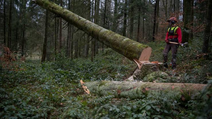Im vergangenen Jahr wurde weniger Holz aus dem Schweizer Wald genutzt.
