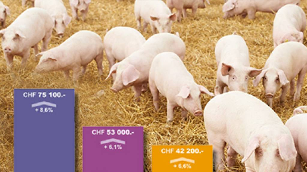 Schwein gehabt: Die gestiegene Nachfrage nach «Schwinigem» hat den Einkommen in der Schweizer Landwirtschaft gut getan. Auch Covid-19 war den Bauern gnädig: Die Pandemie führte zur Rückbesinnung auf einheimische Produkte, vor allem direkt ab Hof (Pressebild).