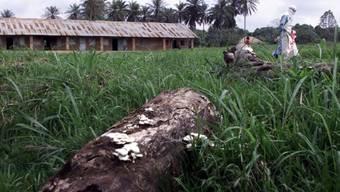 Nach einem Ebola-Ausbruch 2001 in Gabun (Symbolbild)