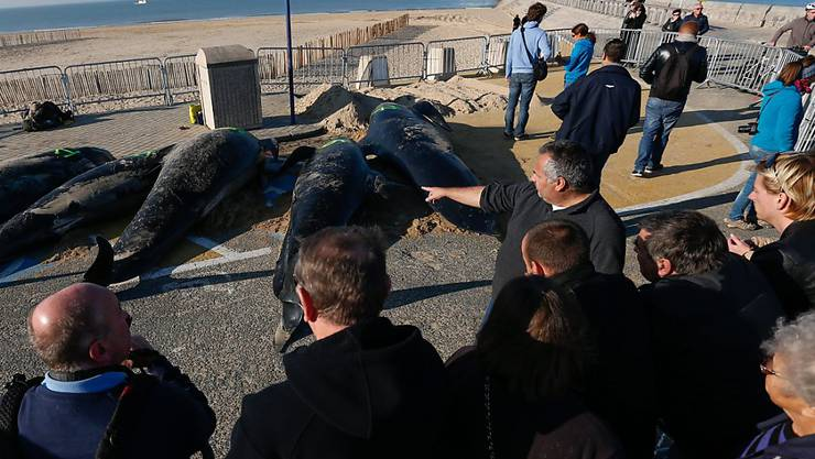Die Wale sind am Strand verendet