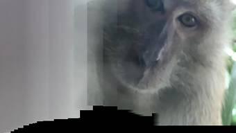HANDOUT - Das von Zackrydz Rodzi zur Verfügung gestellte Foto zeigt einen Affen, der ein Selfie mit Rodzis Smartphone fotografiert hat. Foto: -/Zackrydz Rodzi/AP/dpa - ACHTUNG: Nur zur redaktionellen Verwendung im Zusammenhang mit der aktuellen Berichterstattung und nur mit vollständiger Nennung des vorstehenden Credits