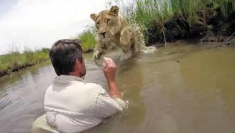 Löwen umarmen 360° – lesen Sie in der Box unten, wie sie dieses 360°-Video am besten schauen.