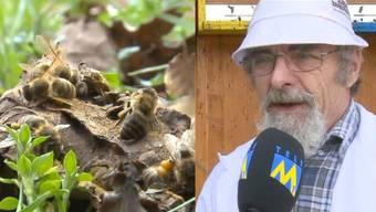 Tote Bienen: Imker Franz Schultermandl hat sie zu Tausenden neben seinem Bienenhäuschen gefunden.