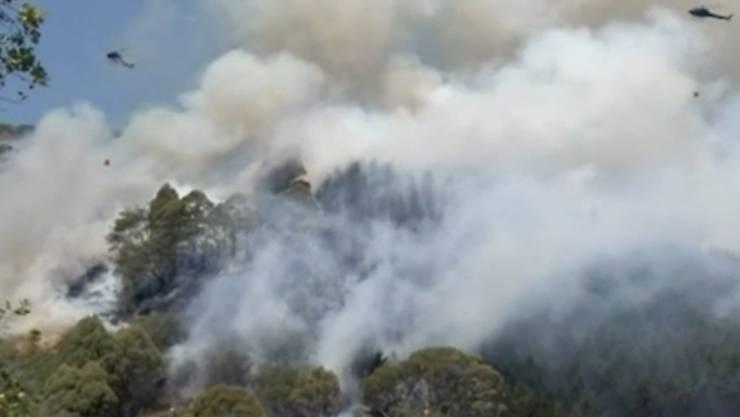 Rund 3000 Menschen in Neuseeland haben ihre Häuser und Wohnungen wegen eines Buschbrandes verlassen müssen.