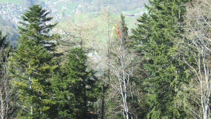 Einer der Verunfallten blieb in einer Baumkrone hängen.