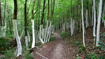 Auch während der Coronakrise der «Hit» im Naturpark Thal: Der Holzweg.