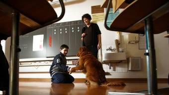 Der zweijährige Toller Moab unterstützt Heilpädagogin Linda Stutz aktiv bei ihrer Arbeit an der Primarschule Berikon.  Chris Iseli