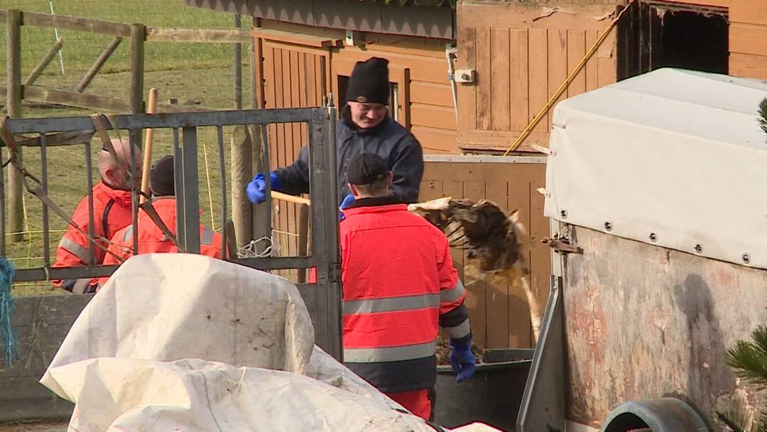 4.2.2020: Die Kantonspolizei Aargau findet auf einem Hof in Oftringen dutzende tote und verweste Tiere.