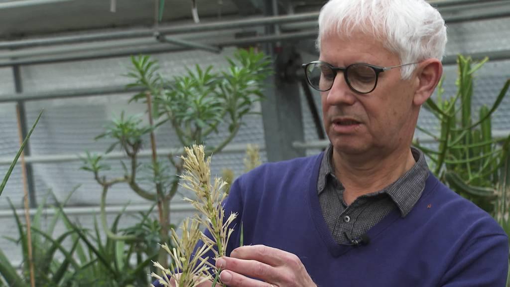 Hüter der 1000 Samen: Hanspeter Schumacher geht in Pension