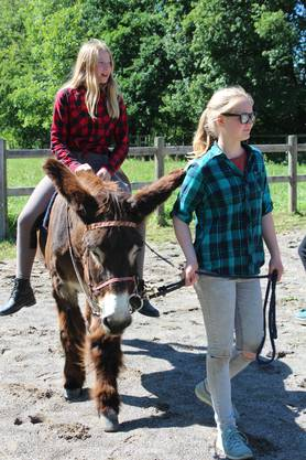 Neben Eseln machen auch Ponys, Ziegen und Tauben mit.