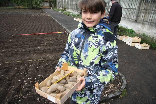 Die Kartoffeln müssen in den Gartenboden.