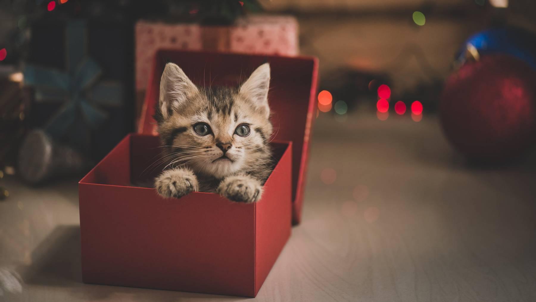 Tiere auf Weinachten zu schenken ist heikel – denn es bringt nebst Freude auch viel Verantwortung mit sich.