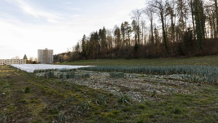 Stillstand: In den nächsten zwei Jahren wird mit den Baulandparzellen «Buech» nichts geschehen.