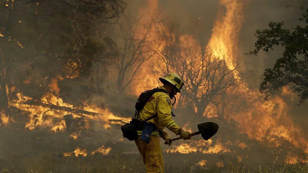 An vordertster Front: Ein kalifornischer Feuerwehrmann bekämpft in Morgan Valley Road bei Lower Lake einen Buschbrand.
