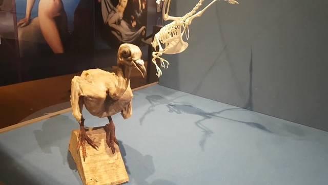 Taubenausstellung Naturmuseum