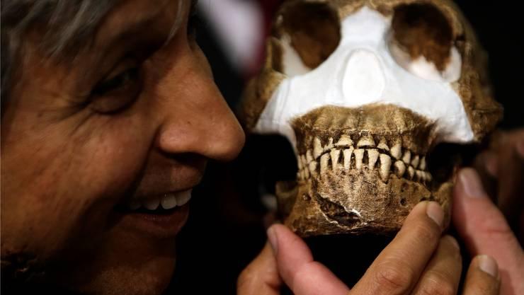 Wie viele Millionen Jahre schauen dich an? Leider weiss man (noch) nicht, wie alt dieser teil-rekonstruierte Schädel des Homo naledi aus Südafrika eigentlich ist.THEMBA HADEBE/Keystone