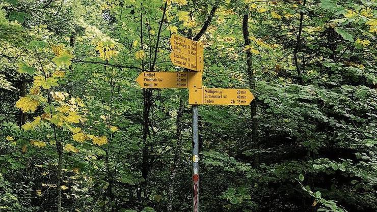 Schämbele in Mülligen, Tschämbele in Windisch: Auf dem Wanderweg kann man auch gemütlich gehen.