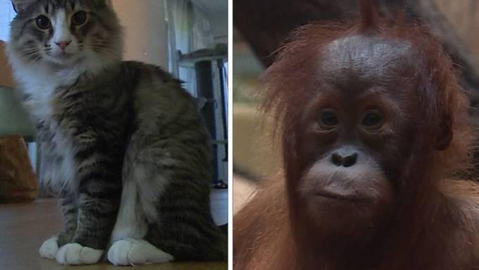 Ein Kitten zieht ein / Tierische Kinderstube
