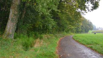 Im Waldstück nördlich des Schöpflerbaches (linke Bildhälfte, vorne) soll der Graben ausgehoben und die Sickerleitung verlegt werden.