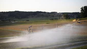 Intensive Bewässerung kann in manchen Weltregionen die Intensität und Häufigkeit von Hitzeextremen dämpfen.