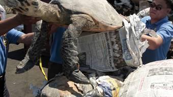 Zollbeamte befreien Schildkröten aus einem Schmugglerlastwagen in Thailand
