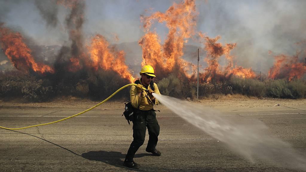 Waldbrand wohl durch defektes Fahrzeug verursacht