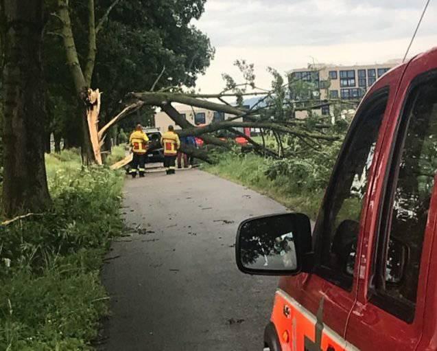 So sah es in Kriessern aus, nachdem ein Baum umgestürzt ist. (Bild: Leserreporter FM1Today)