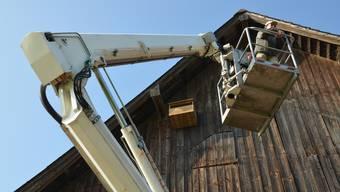 Wieder ist ein Nistkasten für Turmfalken montiert – hier an der Scheune von Urs Stocker in Aettenschwil/Sins.
