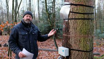 Hier wird das Leben eines Baums untersucht: Andreas Rigling bei einer Messstation in der Nähe der WSL in Birmensdorf. huz