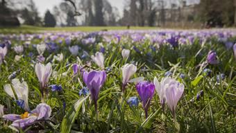 Frühlingserwachen im März