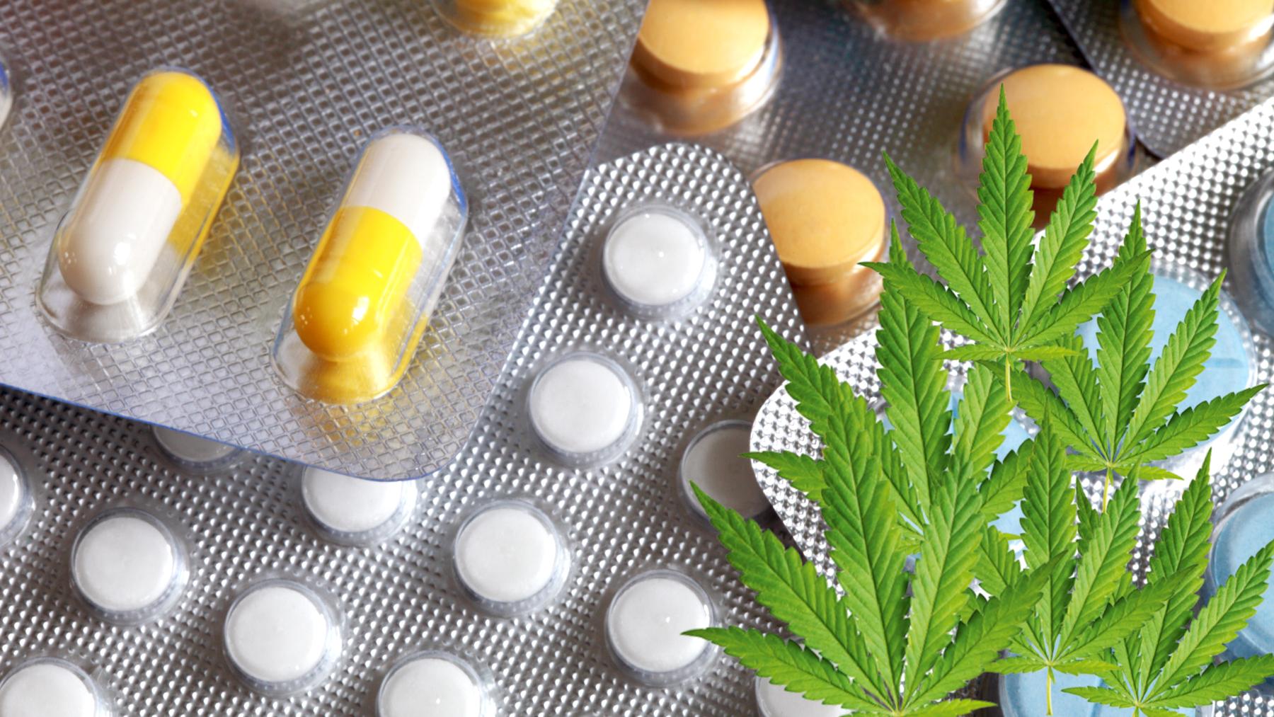 Wird Cannabis bald als Antibiotikum eingesetzt?
