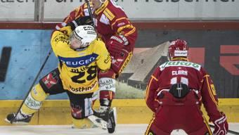 Derby-Fight: Tiger Ville Koistinen kämpft mit SCB-Captain Martin Plüss um den Puck