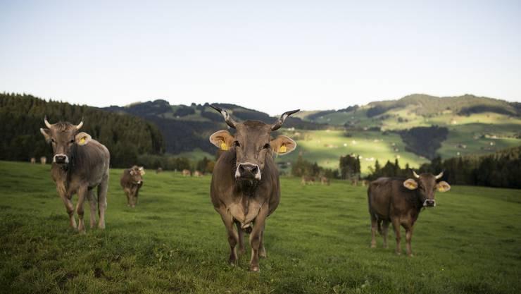 Wir wissen es seit dem Ja zur Masseneinwanderungsinitiative: Die Schweizer sind Landeier. Bauern im Herzen. Provinzler in der Seele. Sie lieben das Land und hassen die Stadt.