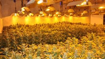 Im März 2015 hob die Polizei die 2500 Hanfpflanzen umfassende Anlage aus.