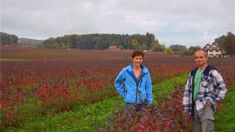 Anita und Thomas Heggli inmitten ihrer Aronia-Sträucher. Im Herbst färben sich die Blätter blutrot. ES