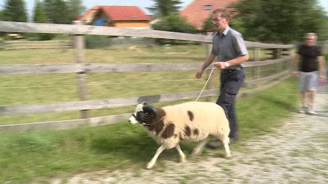 Schaf-Trekking – ein Konzept mit Zukunft?