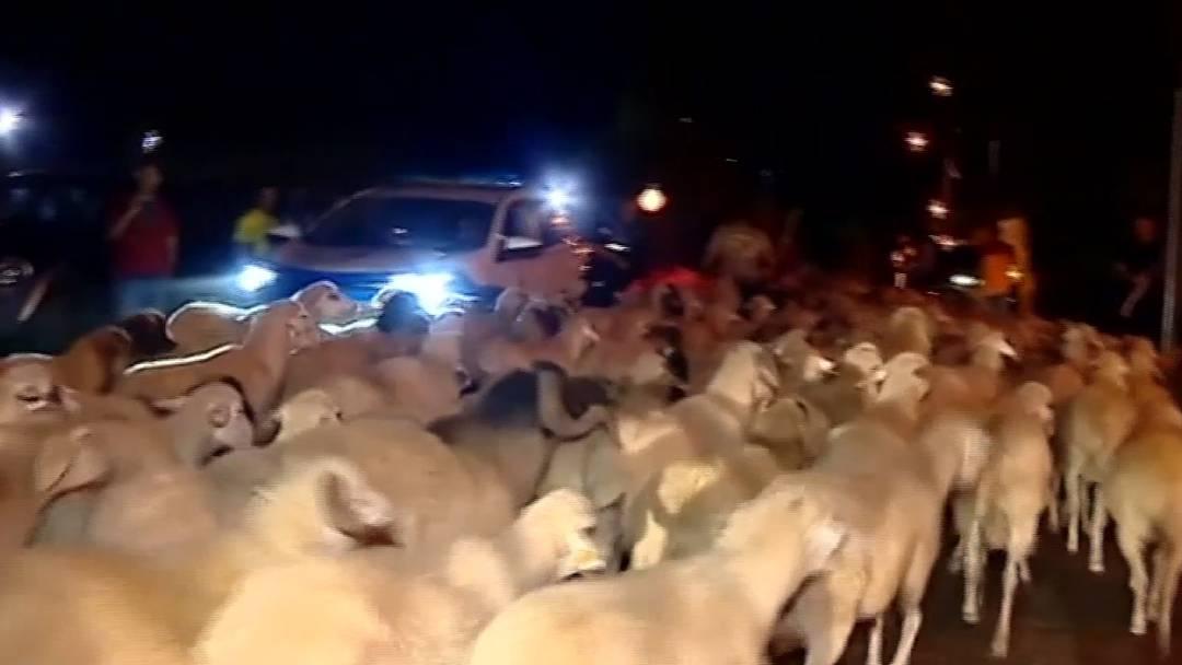 Feuerhölle im Ferienparadies: Mensch und Tier auf der Flucht