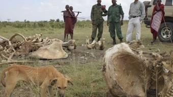 Opfer von Wilderern: Überreste eines Elefanten in Tansania (Archiv)