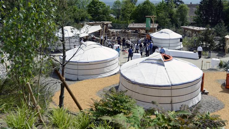 Die neue mongolische Steppe im Zoo Zürich umfasst auch ein Jurtendorf. Interessierte Besucher haben sogar die Möglichkeit, hier zu übernachten.
