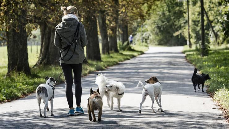 In Riehen wurden Giftköder gefunden. Hundefreundinnen und -freunden im entsprechenden Gebiet wurde vom Veterinäramt zur Vorsicht geraten. (Symbolbild)
