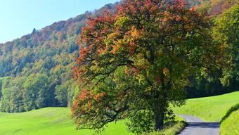 Leserbilder Herbst Kanton Solothurn 15.10.19