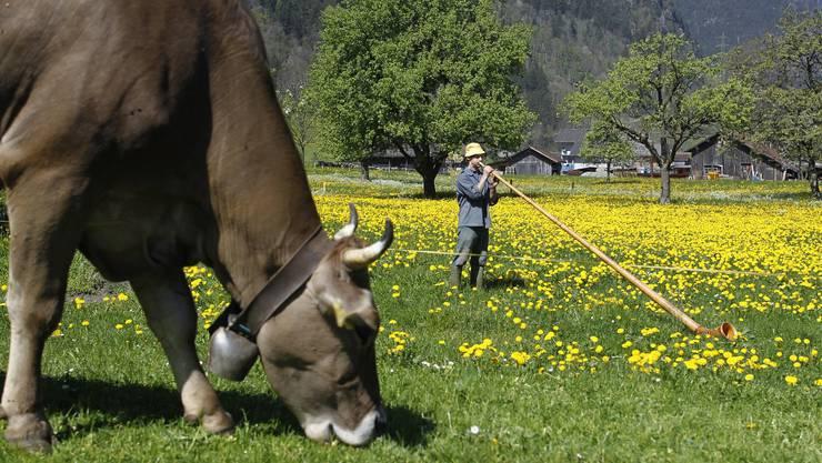 Der Urner Bio Bauer Ambros Walker uebt das Alphornspielen am Mittwoch, 28.April 2010, einer Wiese neben seinem Bauernhof in Erstfeld im Kanton Uri in der Zentralschweiz. (KEYSTONE/Urs Flueeler)
