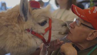 Shannon Joys Tiere und ihre Spezialität: der heilsame «Lama-Kuss».
