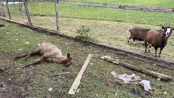 Tierdrama in Oftringen: Ein Mitarbeiter des Veterinärdienstes arbeitete im Fall mit, obwohl er bereits in einem anderen Kanton angestellt war.