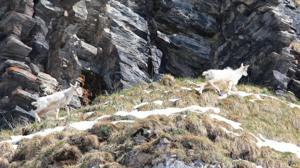 Sensationelle Entdeckung in den Urner Bergen