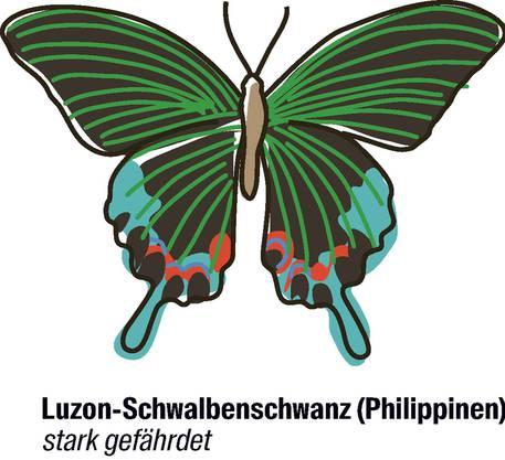 Vorschlag der Philippinen und der EU: der Artenschutz soll strenger werden. Der filigrane Schmetterling kommt nur auf der Insel Luzon vor. Die Unterart, die jetzt speziell geschützt werden soll, wurde erst vor kurzem entdeckt.