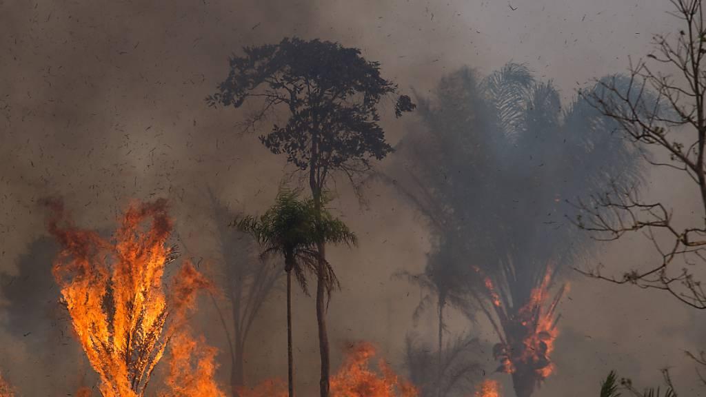 ARCHIV - Ein Waldstück im Amazonas-Gebiet steht in Flammen. Foto: Fernando Souza/dpa