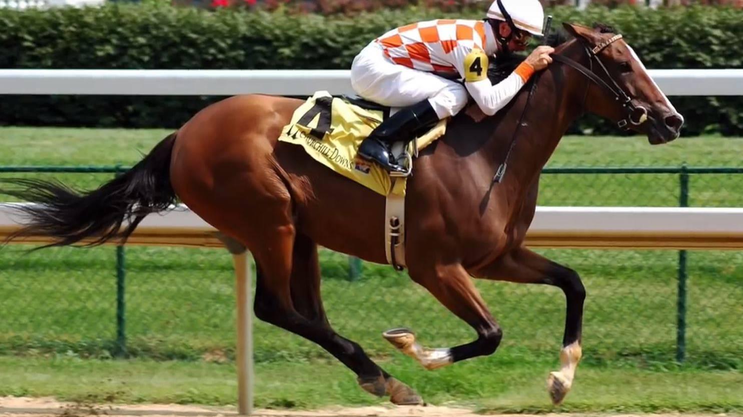 Das Rennpferd Shamrock will es nach drei Jahren Pension nochmals wissen - leider hat es aber keinen Jockey auf dem Rücken.