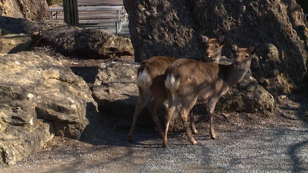 Zuschauerentzug: Zootiere vermissen die Besucher